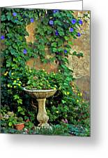 Morning Glory Garden In Provence Greeting Card