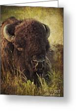 Morning In The Prairie Greeting Card
