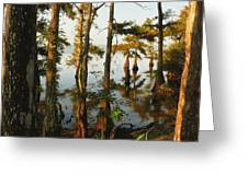 Morning In The Swamps Greeting Card