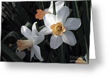 Morning Jonquils Greeting Card