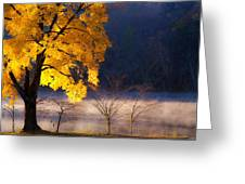 Morning Maple Ll Greeting Card
