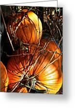 Morning Pumpkins Greeting Card