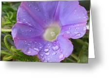 Morning Rain Drops Greeting Card