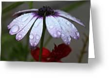 Morning Rain Greeting Card