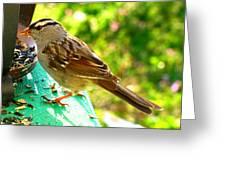 Morning Sparrow II Greeting Card