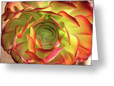 Morning Succulent Greeting Card