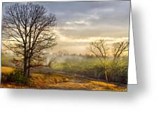 Morning Trees Greeting Card