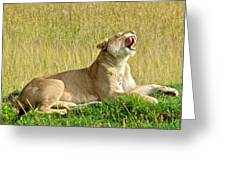 Morning Yawn Greeting Card