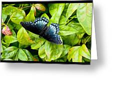 Mosaic Flutterby Greeting Card