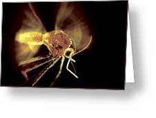 Mosquito Greeting Card