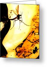 Mosquito In Amber Greeting Card