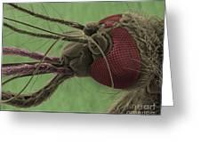 Mosquitos Head, Sem Greeting Card