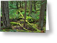 Moss And Fallen Trees In The Rainforest Of The Pacific Northwest Greeting Card
