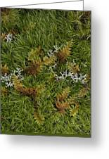 Moss And Lichen Greeting Card