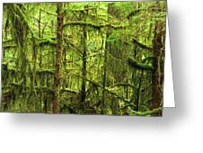 Moss-covered Trees Greeting Card