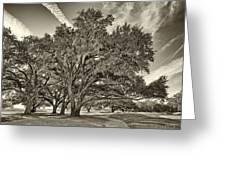 Moss-draped Live Oaks Sepia Toned Greeting Card