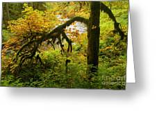 Moss In The Forest Greeting Card