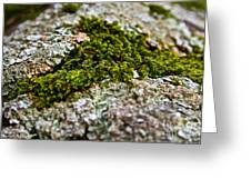 Moss In The Middle Greeting Card