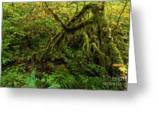 Moss In The Rainforest Greeting Card