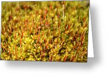 Moss Greeting Card