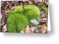 Moss On A Rock Greeting Card