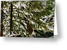 Moss On Trees Greeting Card