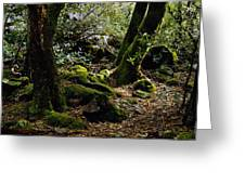 Moss On Trees Yosemite Greeting Card