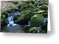 Moss Overflow Greeting Card