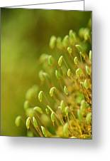 Moss With Capsules Greeting Card