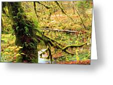 Mossy Bend Greeting Card