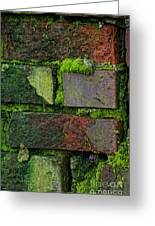 Mossy Brick Wall Greeting Card