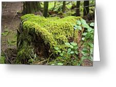 Mossy Old Stump Greeting Card