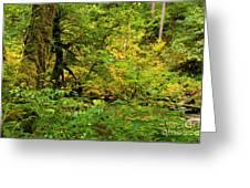 Mossy Rainforest Greeting Card