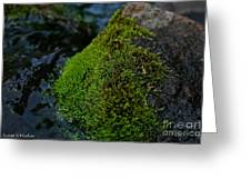 Mossy River Rock Greeting Card