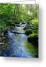 Mossy Rocks And Water   Greeting Card