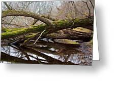 Mossy Tree Greeting Card by Ms Judi