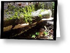 Mossy Waterfall On Mushroom Rock Greeting Card