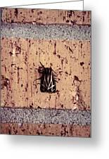 Moth On Brick Greeting Card
