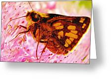 Moth Two Greeting Card