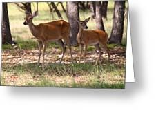 Mother And Yearling Deer Greeting Card