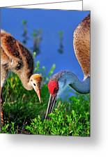 Mother And Young Sandhill Crane Greeting Card