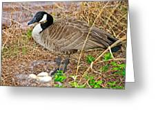 Mother Goose At Nest Greeting Card by Susan Leggett