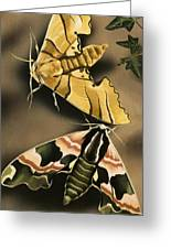 Moths Greeting Card