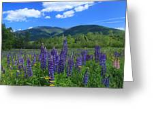 Mount Adams And Lupine Field Greeting Card
