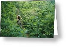 Mountain Biker On Single Track Trail Greeting Card