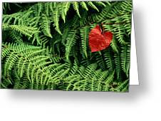 Mountain Bindweed And Fern Fronds Greeting Card