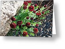 Mountain Blooms Greeting Card