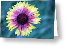 Mountain Daisy Greeting Card