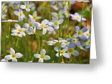 Mountain Flowers 5534 Greeting Card