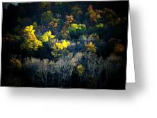 Mountain Foilage Greeting Card